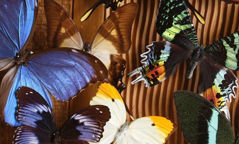 palmier-tour-agence-de-voyages-Collection-des-Papillons