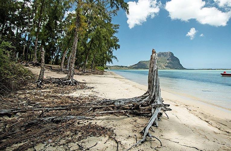 palmier-tour-agence-de-voyages-Ile-aux-benitiers