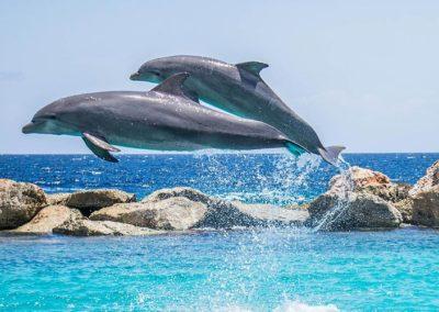 La nage avec les dauphins Ile Maurice