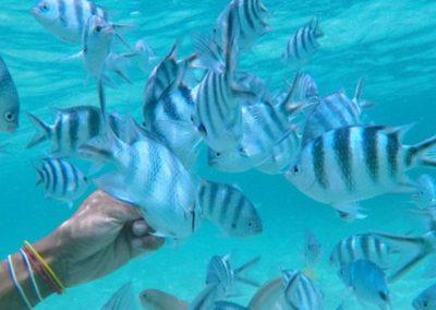 Sous-marin Blue Safari Ile Maurice