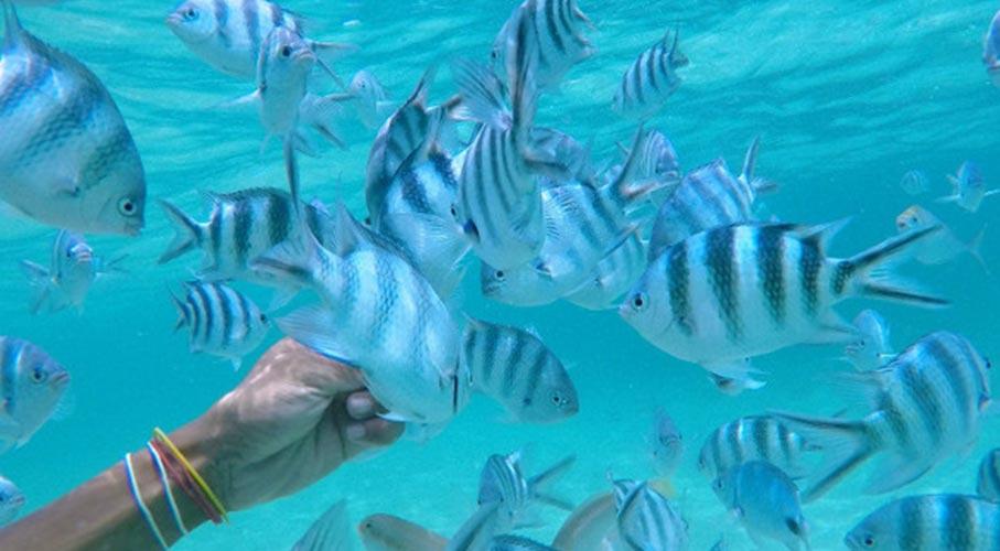 palmier-tour-agence-de-voyages-Sous-marin-Blue-Safari