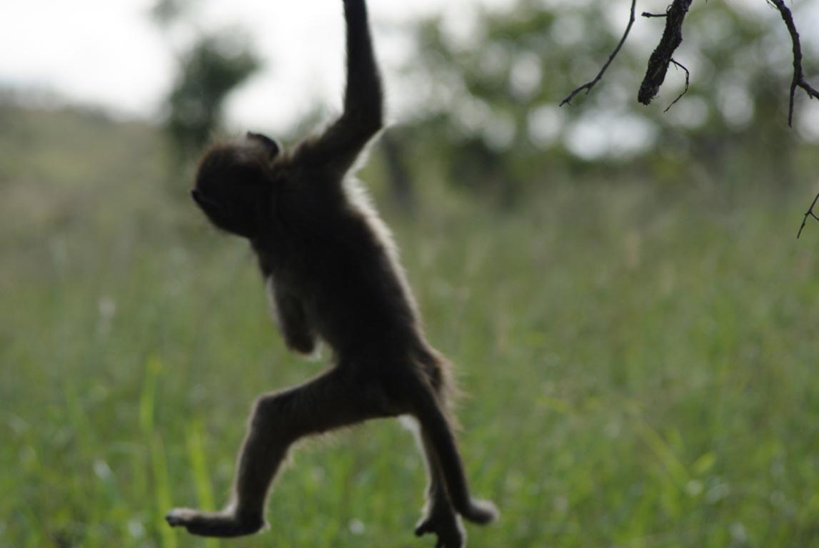 palmier-tour-agence-de-voyages-afrique-16