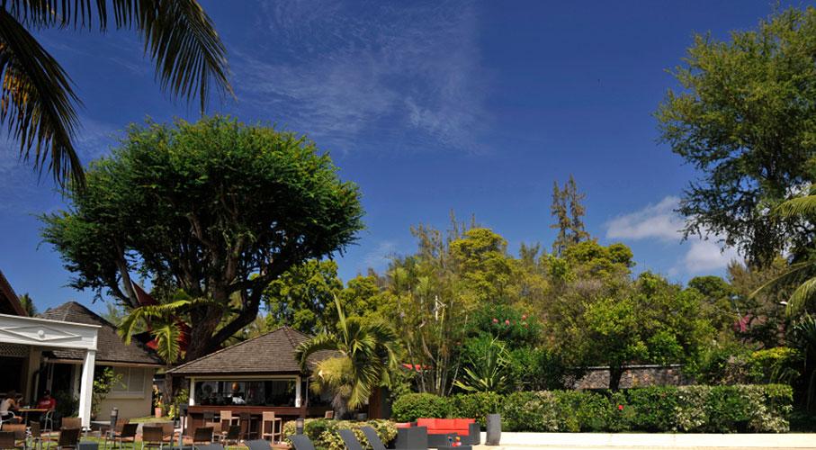 palmier-tour-agence-de-voyages-alamanda-piscine-global