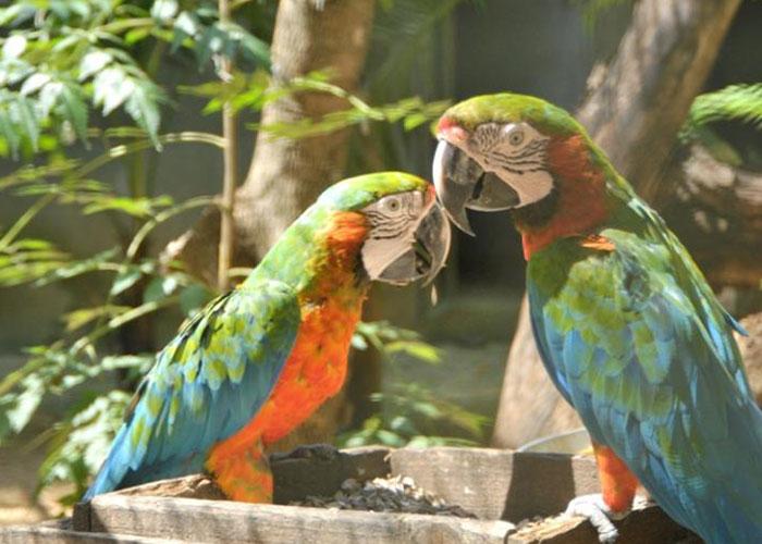 palmier-tour-agence-de-voyages-birds