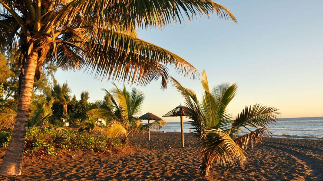 palmier-tour-agence-de-voyages-floralys-plage