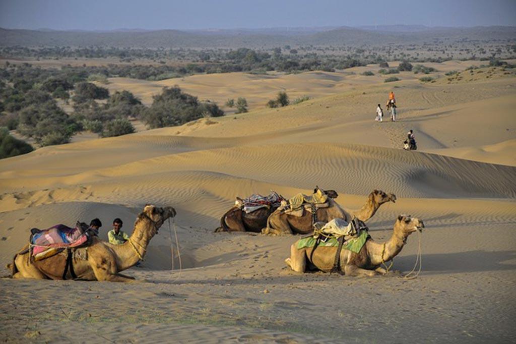 palmier-tour-agence-de-voyages-inde-nord