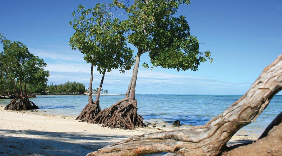 palmier-tour-agence-de-voyages-jalsa-beach-2