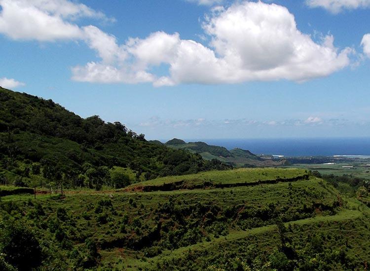 palmier-tour-agence-de-voyages-landscape