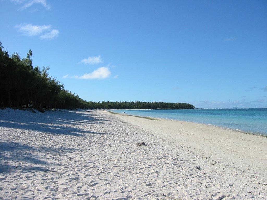 palmier-tour-agence-de-voyages-lile-maurice-2
