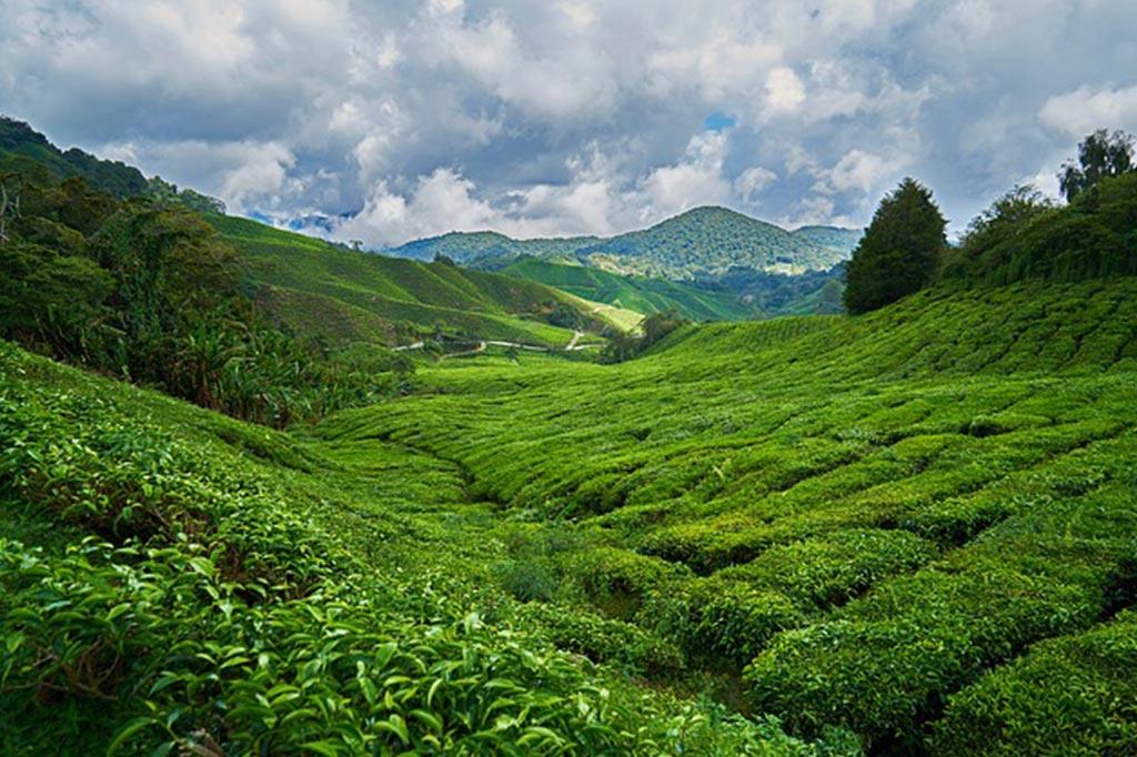 palmier-tour-agence-de-voyages-malaisie-1