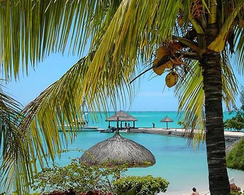 palmier-tour-agence-de-voyages-mont-choisy-1